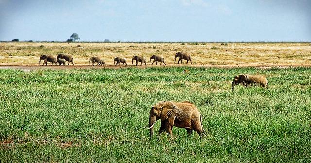 Elephants on African Safari, Africa Travel