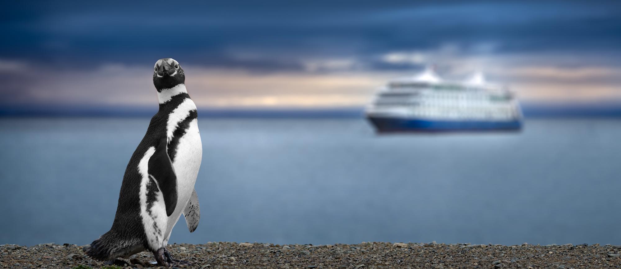 cruise-penguin